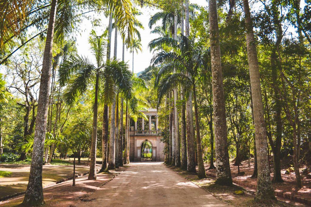 Botanic Gardens in Rio de Janeiro