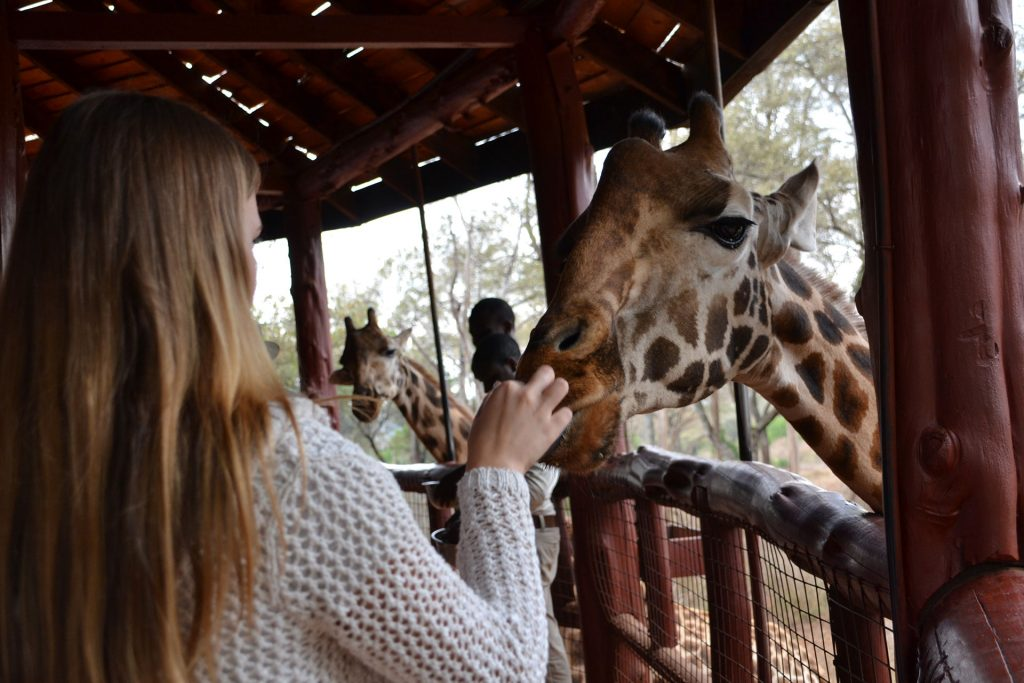 Woman feeding giraffe