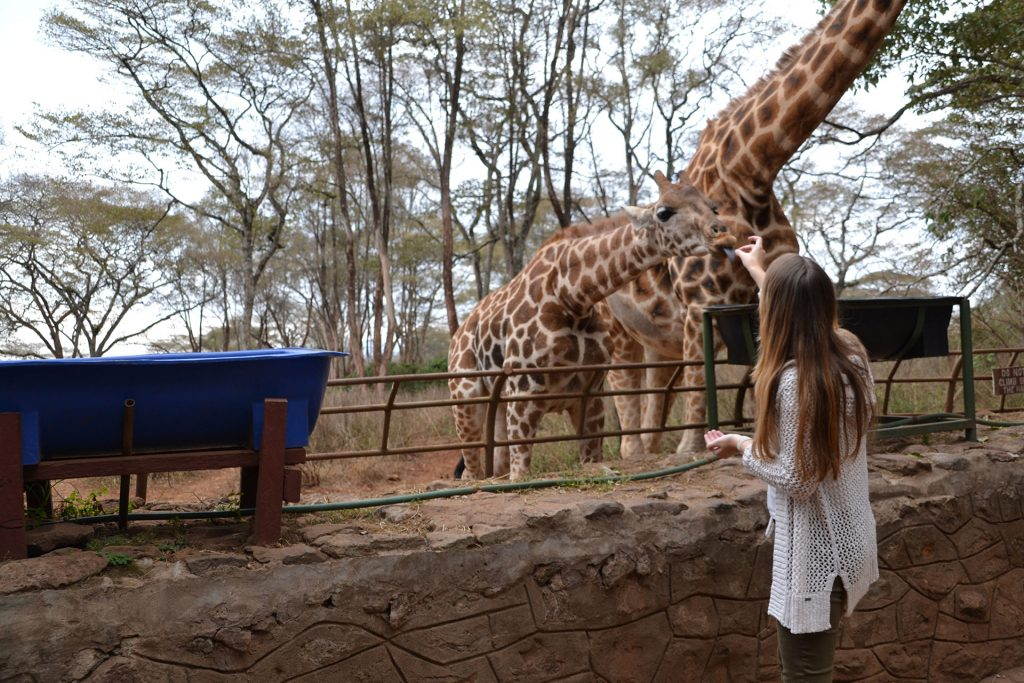 Woman feeding a giraffe