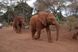 Elephants coming back to DSWT