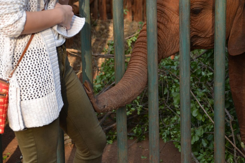 Playful elephant at DSWT