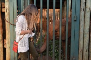 Elephant sniffing woman pants at DSWT