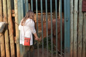 DSWT elephant human interaction