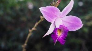Orchid at Singapore Botanic Gardens
