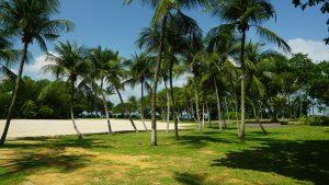 Palm Trees on Sentosa Beach