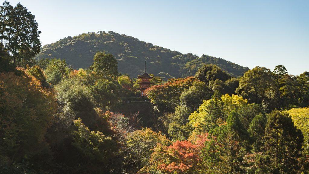 Kyoto Colorful Trees Fall Foliage